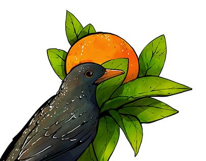 Blackbird & Oranges