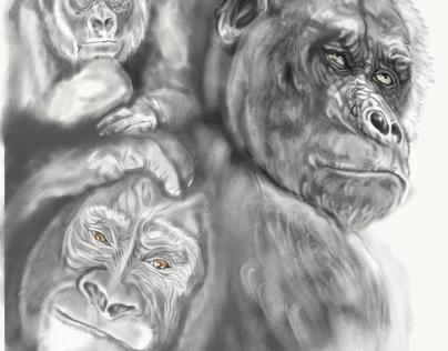 Gorilla s