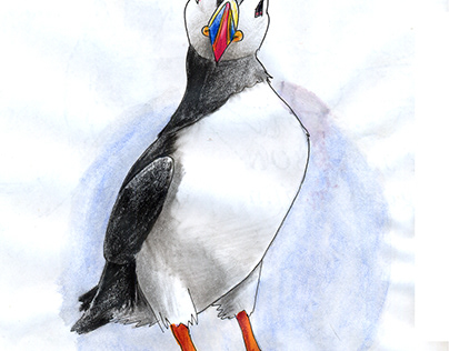 Puffin bird colored pencils drawing