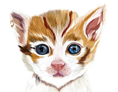 Illustration: Kitten /ˈkɪt(ə)n/