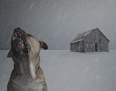 Lost dog loves snow.