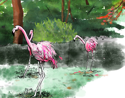 At the Zoo: Flamingos