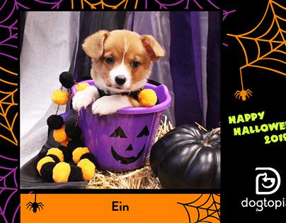 Dogtopia Halloween Photo Booth 2017-2019