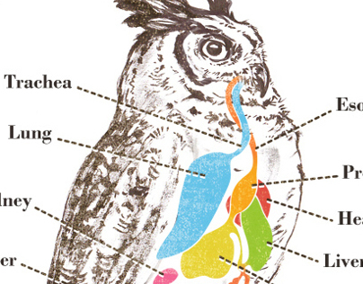 Discovery Owl Pellet