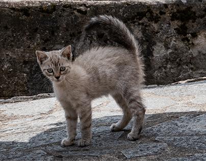 Milù - la gattina di Torrette