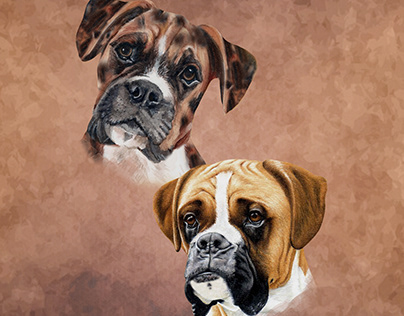 Adobe Illustrator : Digital painting. Dogs portraits.