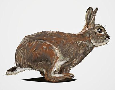 Hase | Rabbit