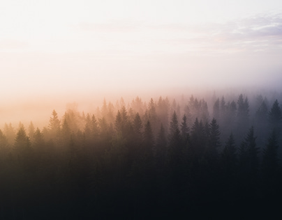 Foggy sunrise in Sweden