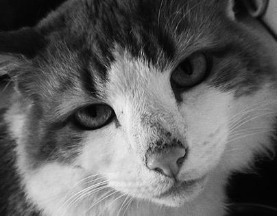 21/6/2015 Pet photography