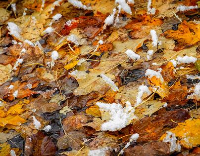 Autumn - Winter