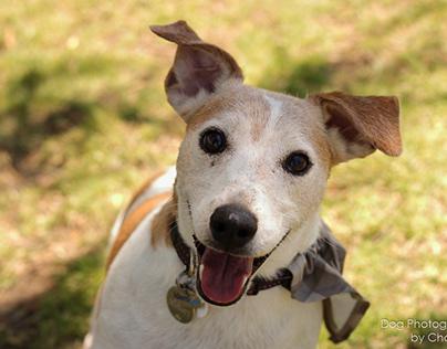 Dog & Family Portraits for Wilna