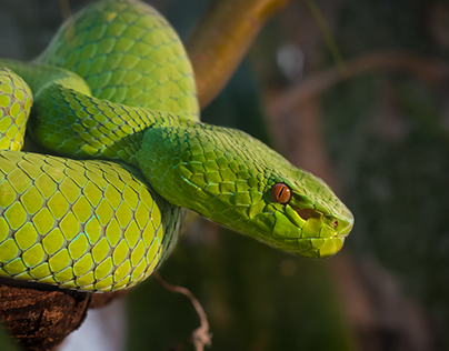 Snakes - Up Close and Personal