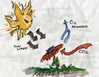 MS 334 Environmental Science