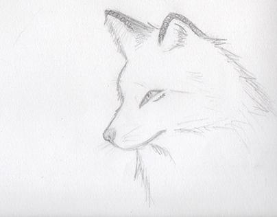 Animal Anatomy practice: Fox