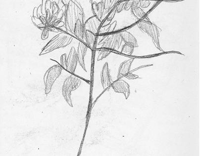 Nature Sketchbook