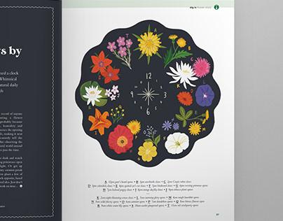 Bloom Magazine Floral Illustration