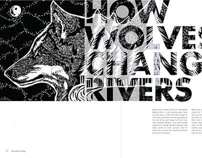 Yellowstone Wolf Magazine Spread