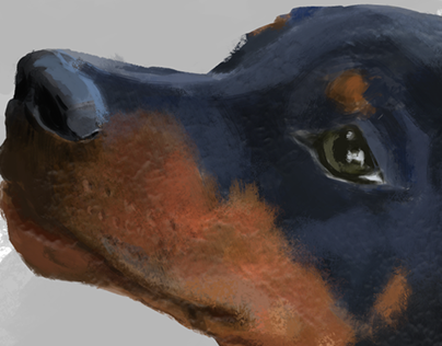 Doberman Puppy Study