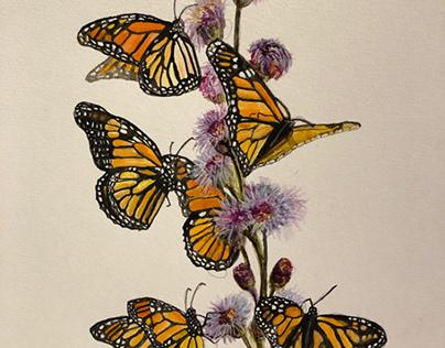 Watercolor illustration Monarchbutterflies