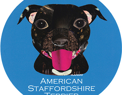 005 | American Staffordshire Terrier