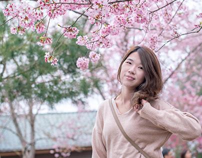恩愛農場-春天就是追著櫻花的季節