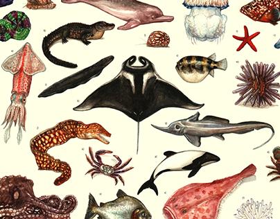27 Tropical species - Brazilian seas and rivers