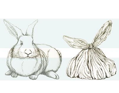 The White Rabbits