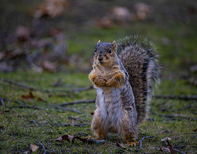 I need peanuts, o.k., gimmie your best squirrel pose.