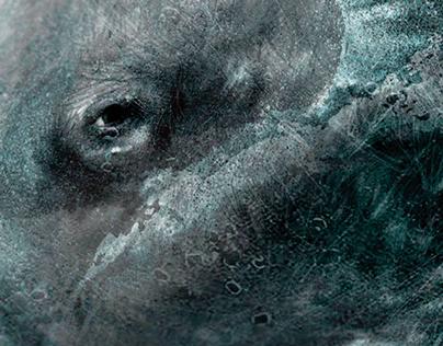 Cachalote - Proyecto ballenas - Artimalia