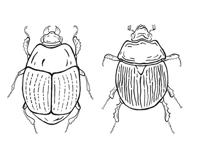 The Gopher Tortoise Beetles