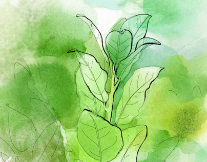 Watercolor and ink animation, nature and organic food