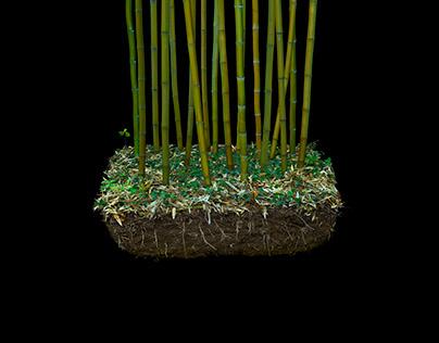 Exposition Black Bamboo à la Fondation EDF