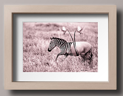 Dressing a zebra