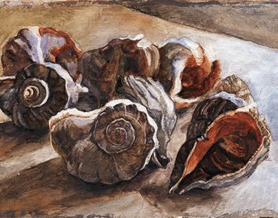 Rapana seashells