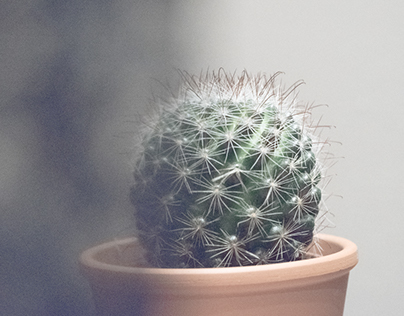 Meet Caroline, my cactus