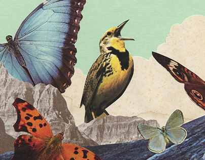 New Bird Collage