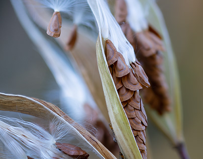Photo Series: Seasons / Case 01: The Fall - Seeds