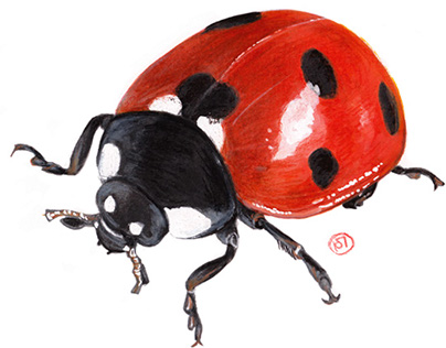 "Insects, amphibians, snails, snakes.. ""Imland"", France"