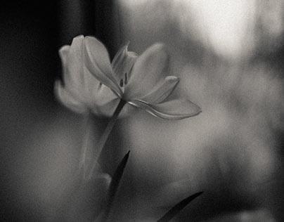 flower and light