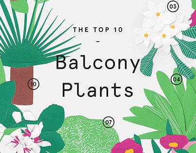 Balcony Plants – Illustration