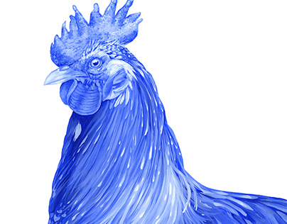 Blue Rooster (Blooster) 2