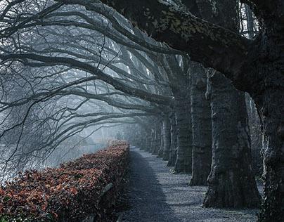 Mystic Plane Trees