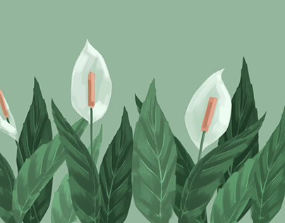 White calla lilies and leaves graphic illustration