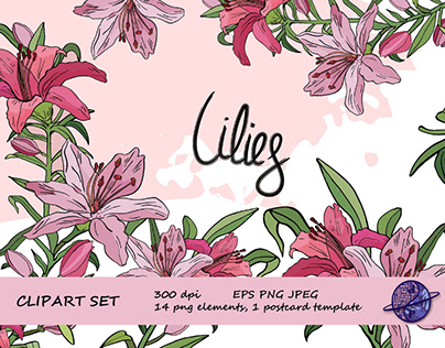 Vector Pink Lily clipart set