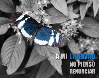 REINCIDIR NO VALE LA PENA