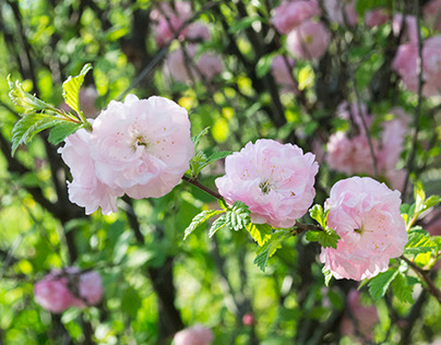Spring is Beautiful 2015