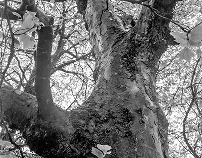 Tree In Monochrome #2