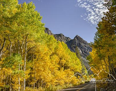 Fall Colors June Lake