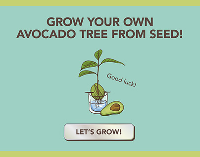 How To Grow Your Own Avocado Tree From Seed!
