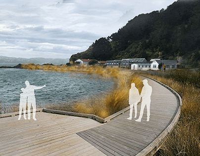 Adaptation // Shelly Bay Masterplan Design